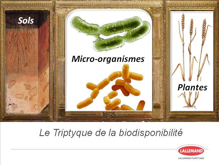 micro-organismes et agriculture